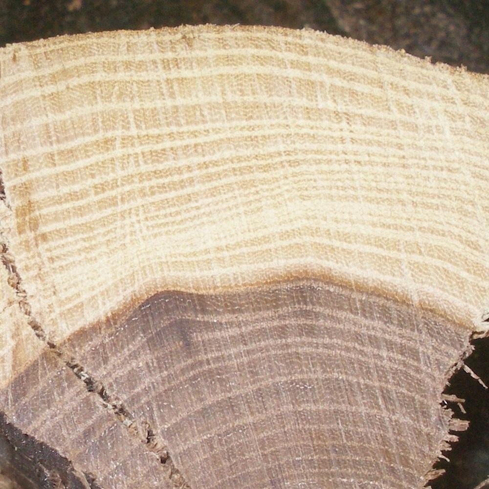 Řez jilmovým dřevem